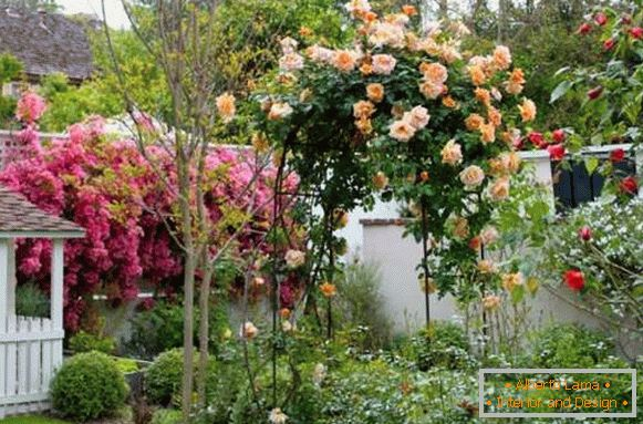 Landscaping of a private home - the best ideas for 2017 with flowers