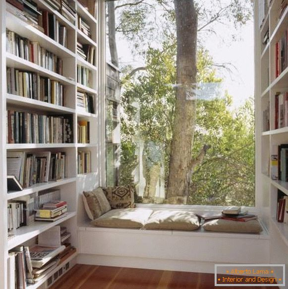 Sitting on the windowsill and bookshelves by the window