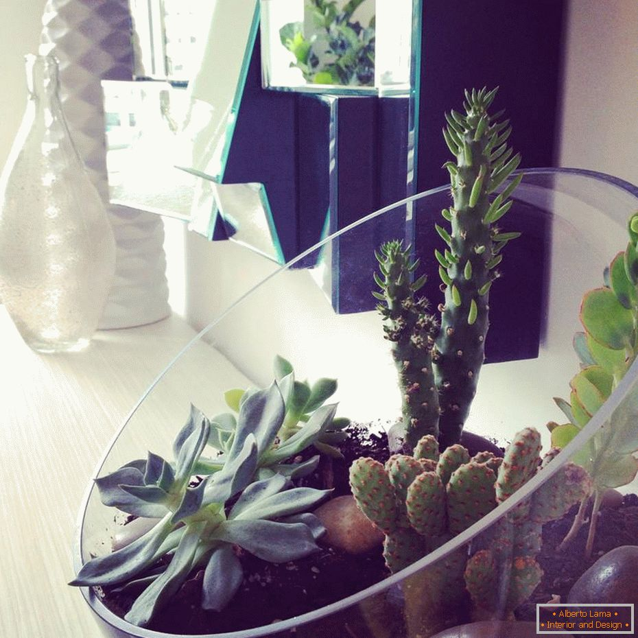 The use of cacti in the interior of the apartment