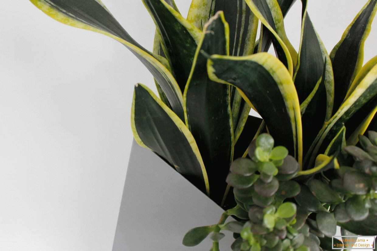 How to choose plants for an apartment