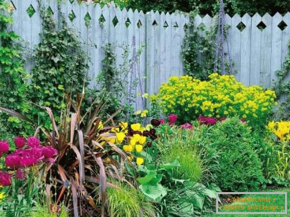 Landscape of the yard with their own hands - contrasting colors