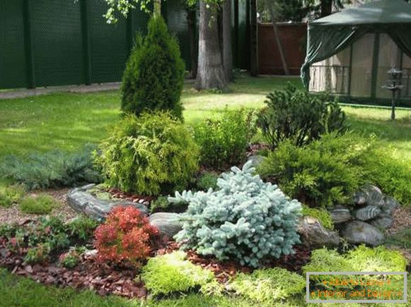 Landscaping the yard with their own hands - photo with coniferous plants