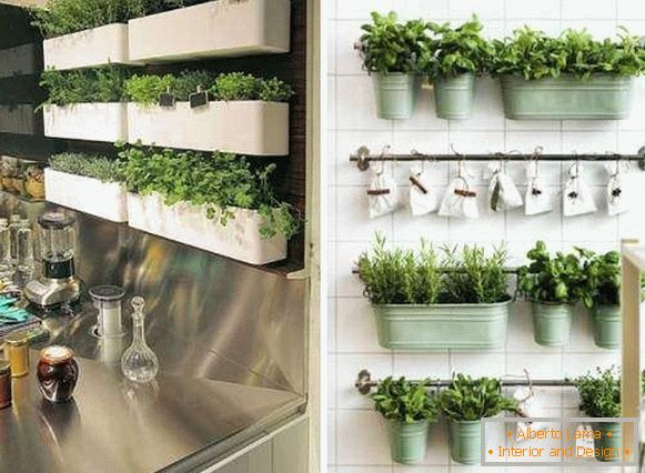 Where to plant herbs in the kitchen - fashion ideas 2018