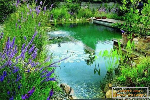 Beautiful photo of swimming pools - pond for swimming in the yard