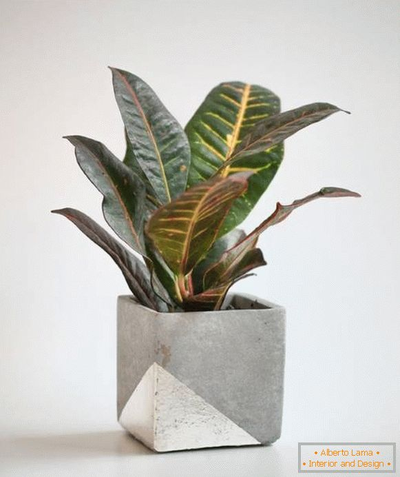 Pot for a houseplant with your own hands