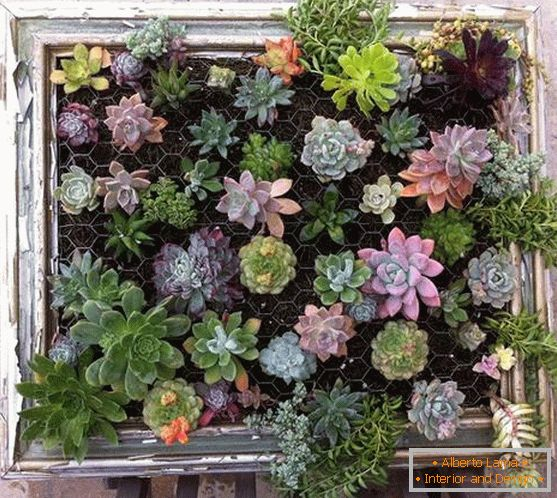 Vertical grid with succulents