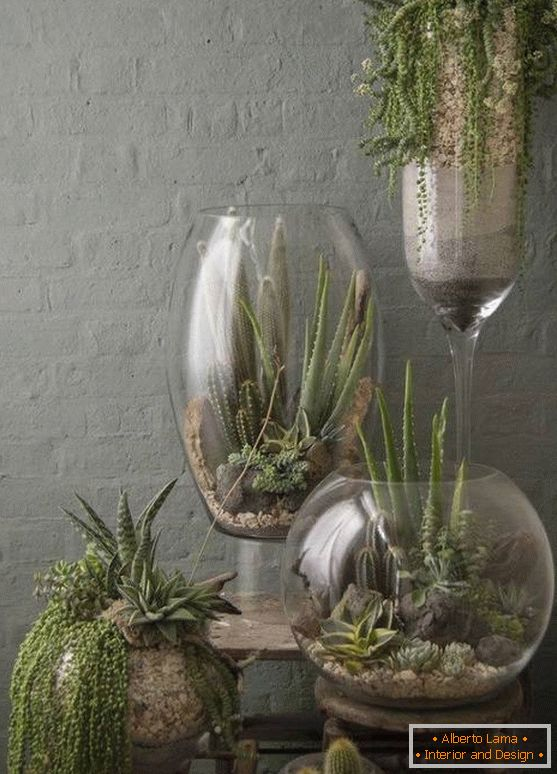 Plants in large glass vases