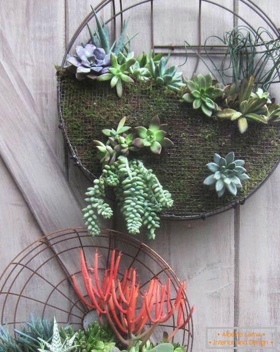 Wall decor with succulents