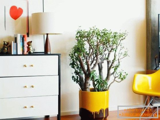 A large money tree in a stylish pot